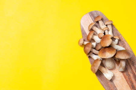 Brown cap Boletus Edulis on a cutting board on yellow background. Edible mushrooms on a wooden plank in the kitchen. Nobody Banque d'images