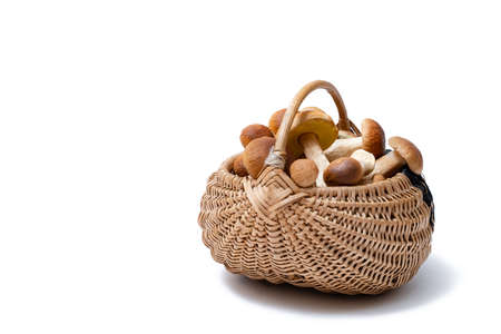 Full wicker basket of Boletus Edulis isolated on white background. Edible mushroom basket with space for text. Nobody