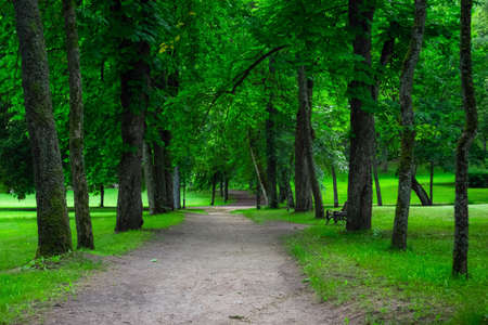Path in public park surrounded by lush green woods on a sunny day. Beautiful road in the city park. Nobody Banque d'images