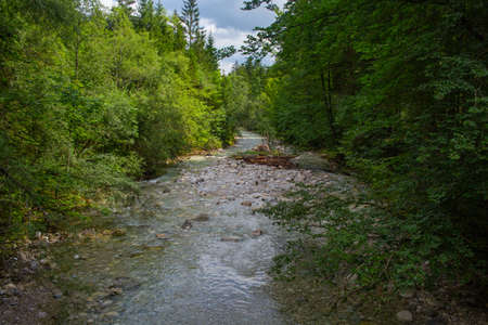 Peaceful stream flowing through forest Imagens