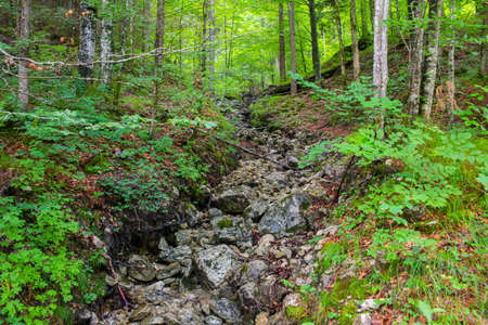 Mountain forest brooks rocky bottom, tranquil scenery, relax and meditation Imagens