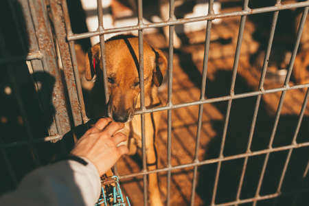 Photo of a sad dog and a hand touching it through bars. Standard-Bild