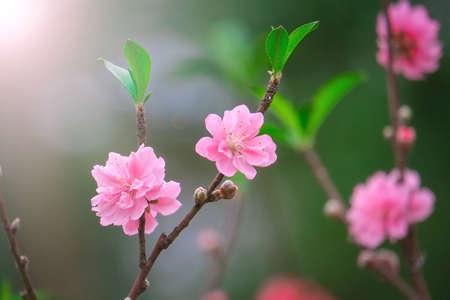 Cherry spring flower print Фото со стока