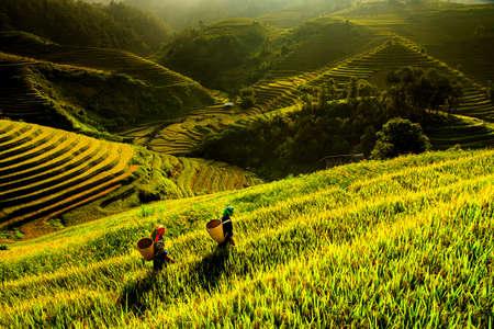 The landscape of Saigon: Ruộng lúa trên ruộng bậc thang Mù Cang Chải, Yên Bái, Việt Nam. Kho ảnh