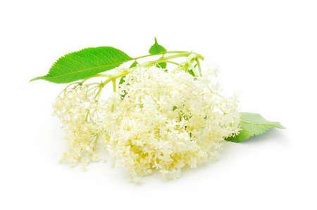 flores de sauco