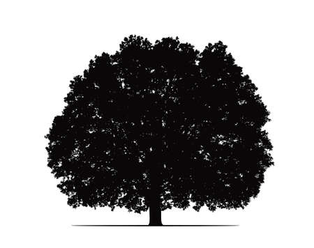 old oak silhouette photo
