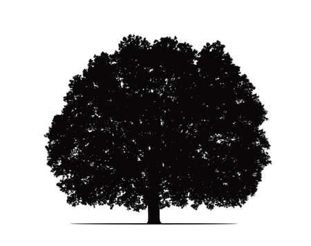 arboles blanco y negro: silueta de roble viejo