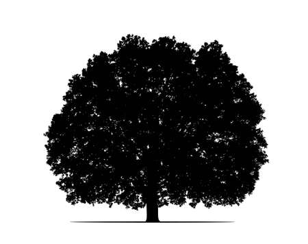 black shadow: oak tree silhouette
