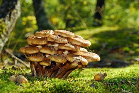 edible mushrooms Stock Photo - 8546914