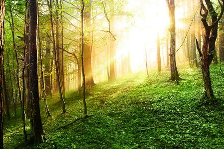 bosque de la puesta del sol