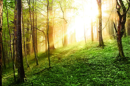 sunset forest photo