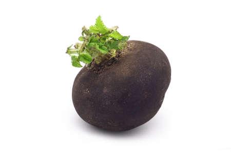 black radish on white background photo