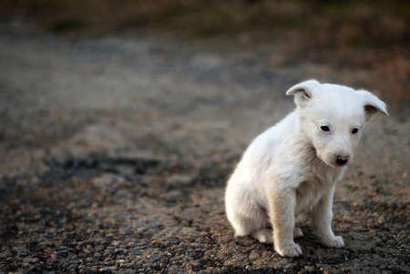 alone and sad: sad puppy on the street Stock Photo
