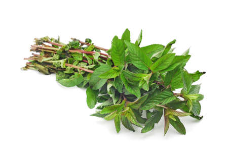 wild mint: wild mint on white background Stock Photo