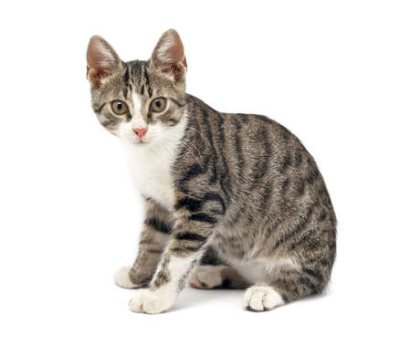 surprised cat on white background photo