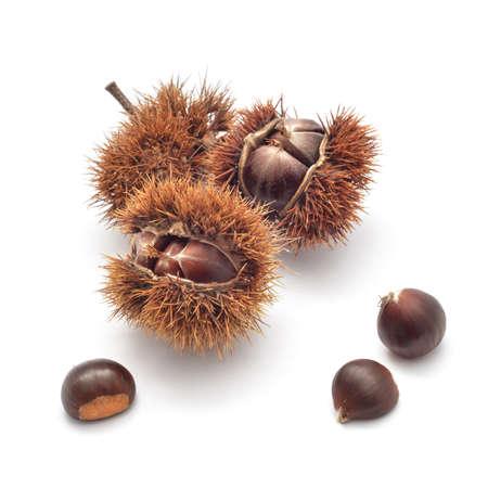 marron: edible chestnuts on white