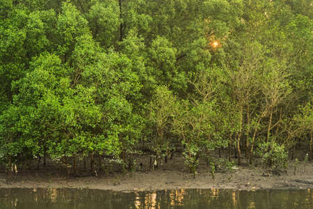 tide: Mangrove forest in low tide Stock Photo