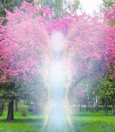 Beautiful spring concept with an angel and pink sacura Cheryy bloosoms tree