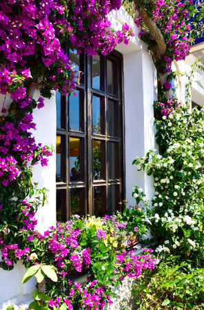 Beautiful house window surrounded by Bougainvillea flowers in Oia Santorini village, Greece Stockfoto