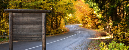 Autumn scene on the road among the forest