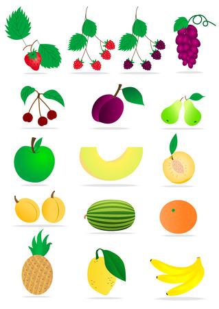 slow food: Set di frutti dettagliati su sfondo bianco  Vettoriali