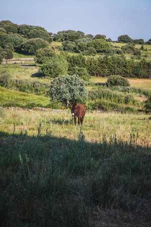 A beautiful brown donkey on a green pasture in nature