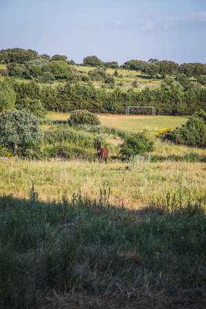 A beautiful brown donkey in a green pasture in the middle of nature