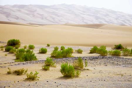 desert sunset: Surviving plants on the sand dunes of Liwa Oasis, United Arab Emirates Stock Photo