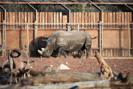 hippopotamus: Hippopotamus en el interior del recinto Foto de archivo