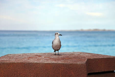 wingspan: Seagull standing on a pier rock Stock Photo