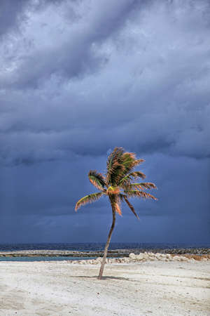 sunny day: Sunlit palm tree with stormy clouds in the background. Paradise Island, Bahamas