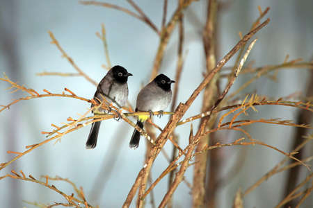 birds in tree: Pair of birds on a tree branch
