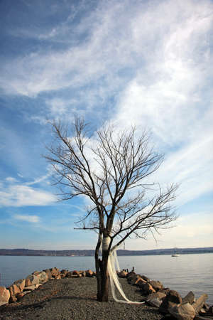 hudson river: Blue sky and bare tree on the Hudson river bank