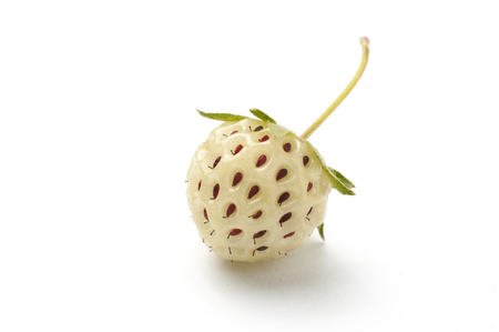 Pineberry isolated on white