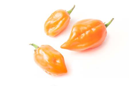 Three habanero orange chili pepper isolated on white