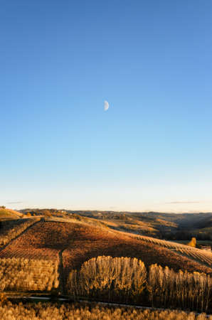 Vineyard of Langhe (Piedmont, Italy) in autumn at evening with rising moon Stock Photo