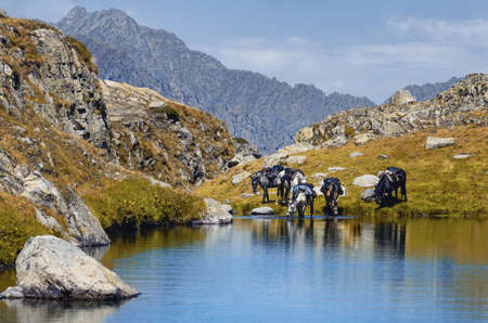 eco-friendly tour with horses in the mountains of Maritime Alps National Park (Lake of Vej del Bouc, Italy)