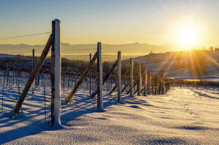 Vineyards of Barolo in the hills of Langhe, (Piedmont, Italy) at sunset. Countryside and rows covered by the snows of december