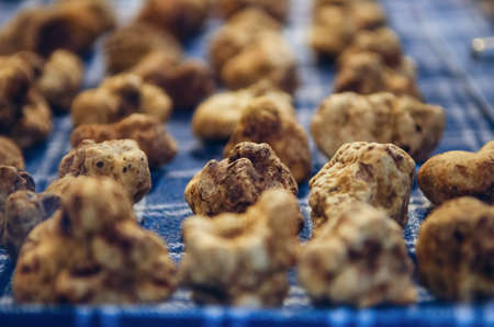 White Truffles (Tuber Magnatum Pico) on a trader stall of the Fiera del Tartufo (Truffle Fair) of Alba, Piedmont (Italy), most important international truffle market in the world Stok Fotoğraf