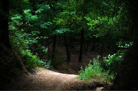 Path through an intricate wood