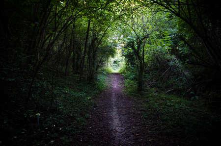 Passage through an intricate wood
