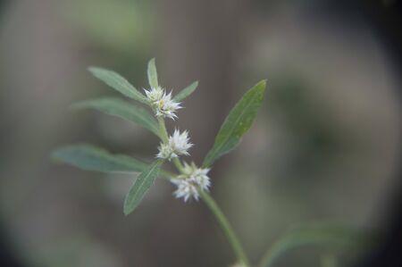 petites fleurs: Direction de petites fleurs