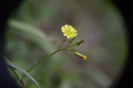 tiny: Tiny flower Stock Photo