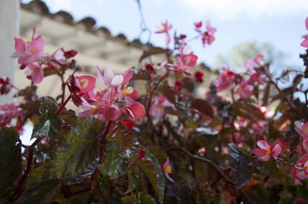Flower garden 版權商用圖片