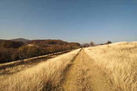 non urban: mud road through yellow dry grass with woods along