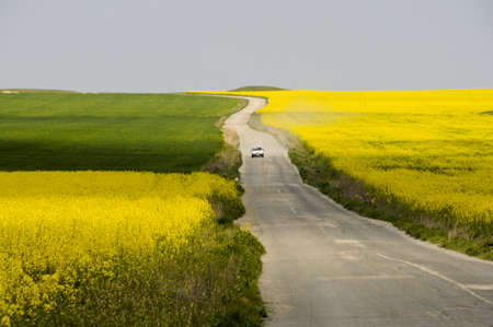 car driving on asphalt road between rapeseed fields Stock Photo - 11400383