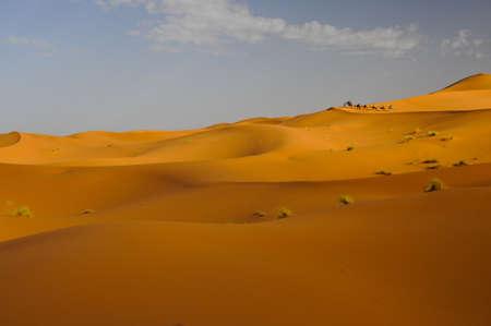camel caravan with tourists riding along sand dunes at sunrise  photo