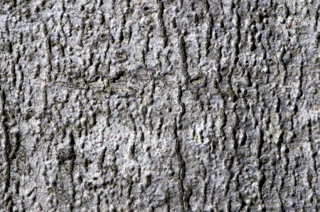 macro detail of a forest tree bark photo