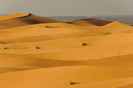 undulating: undulating sand dunes in sahara desert
