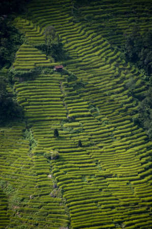 little house inbetween rice terraces on hillside in sikkim india photo